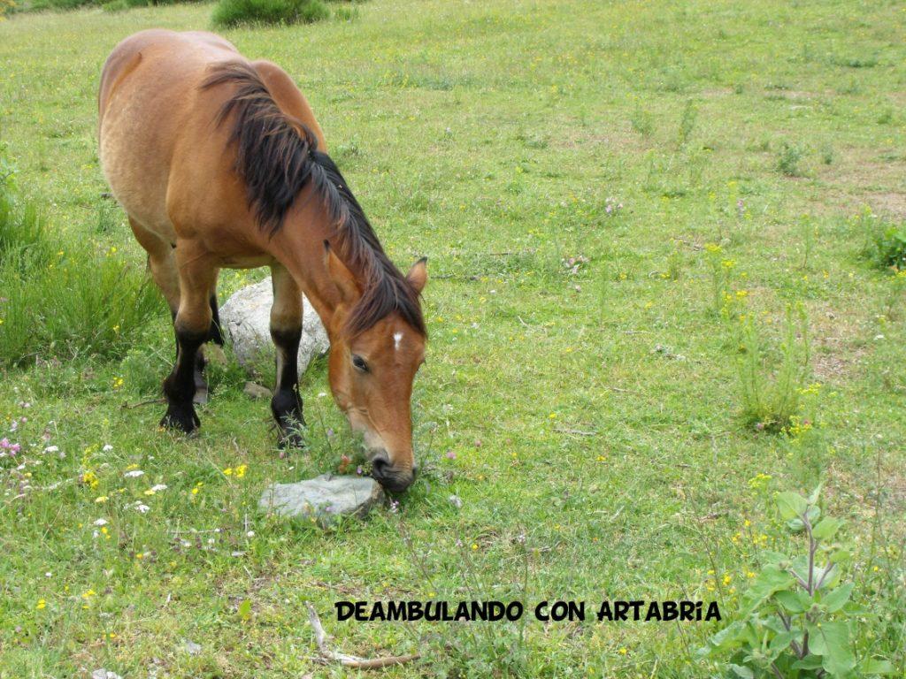 DSCF0229 1024x768 - Un fin de semana en Somiedo (Asturias)