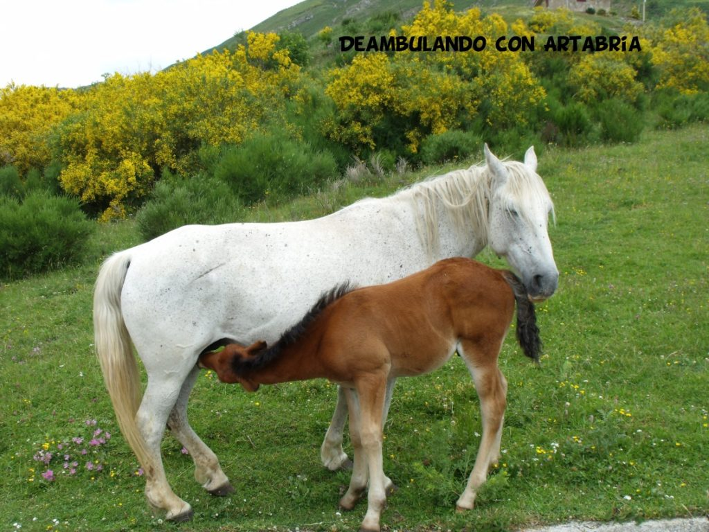 DSCF0230 1024x768 - Un fin de semana en Somiedo (Asturias)