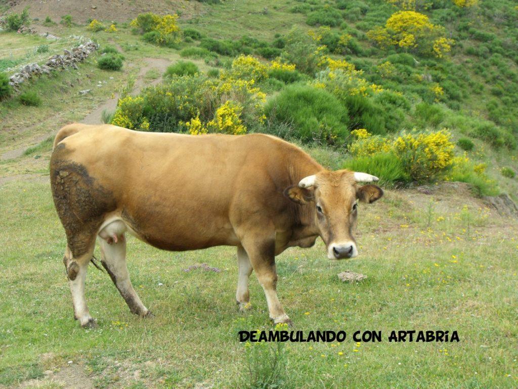 DSCF0293 1024x768 - Un fin de semana en Somiedo (Asturias)