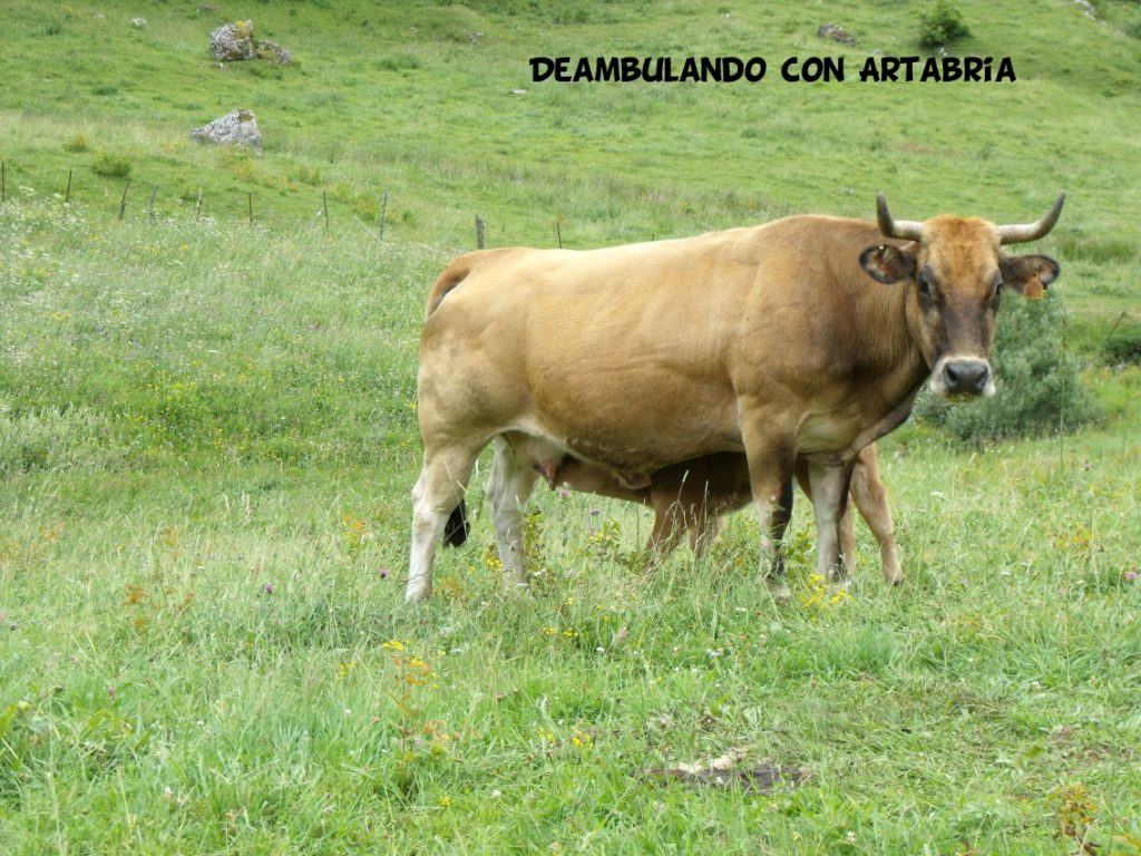 DSCF0315 1024x768 - Un fin de semana en Somiedo (Asturias)