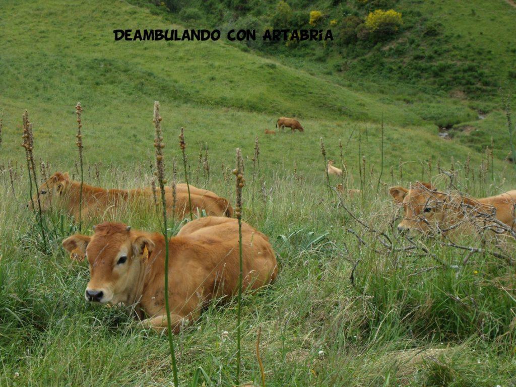 DSCF0321 1024x768 - Un fin de semana en Somiedo (Asturias)