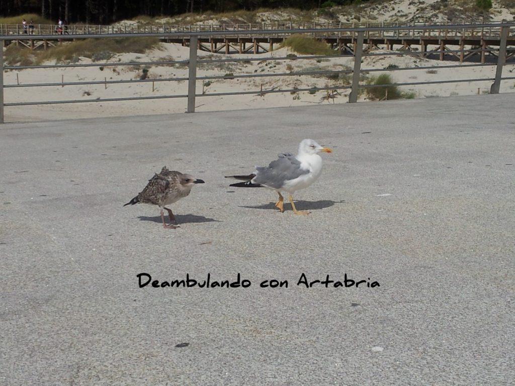 20120922 124351 1024x768 - Un día en las Islas Cíes