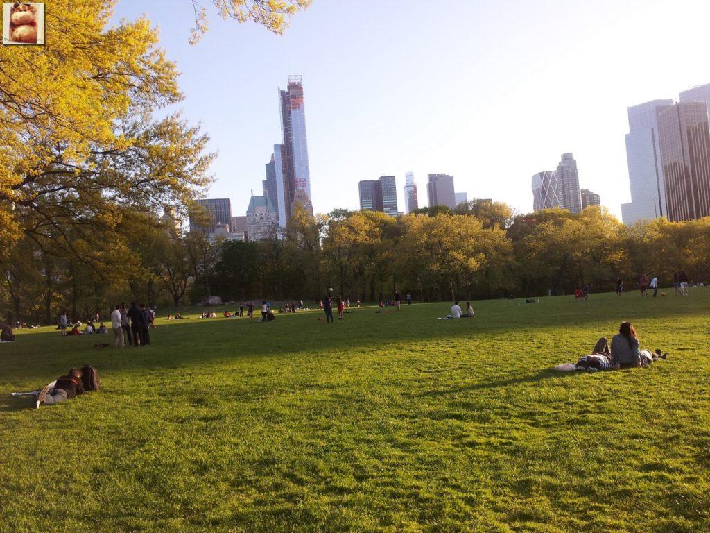 Image00004 1024x768 - Día 5: Nueva York (museos y Central Park)