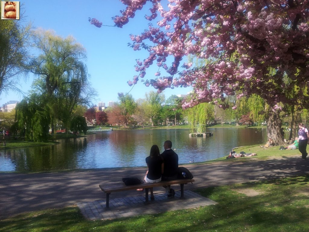 Image00008 4 1024x768 - Qué ver en Boston en 1 día