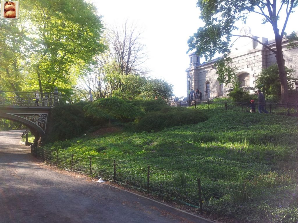 Image00013 1024x768 - Día 5: Nueva York (museos y Central Park)