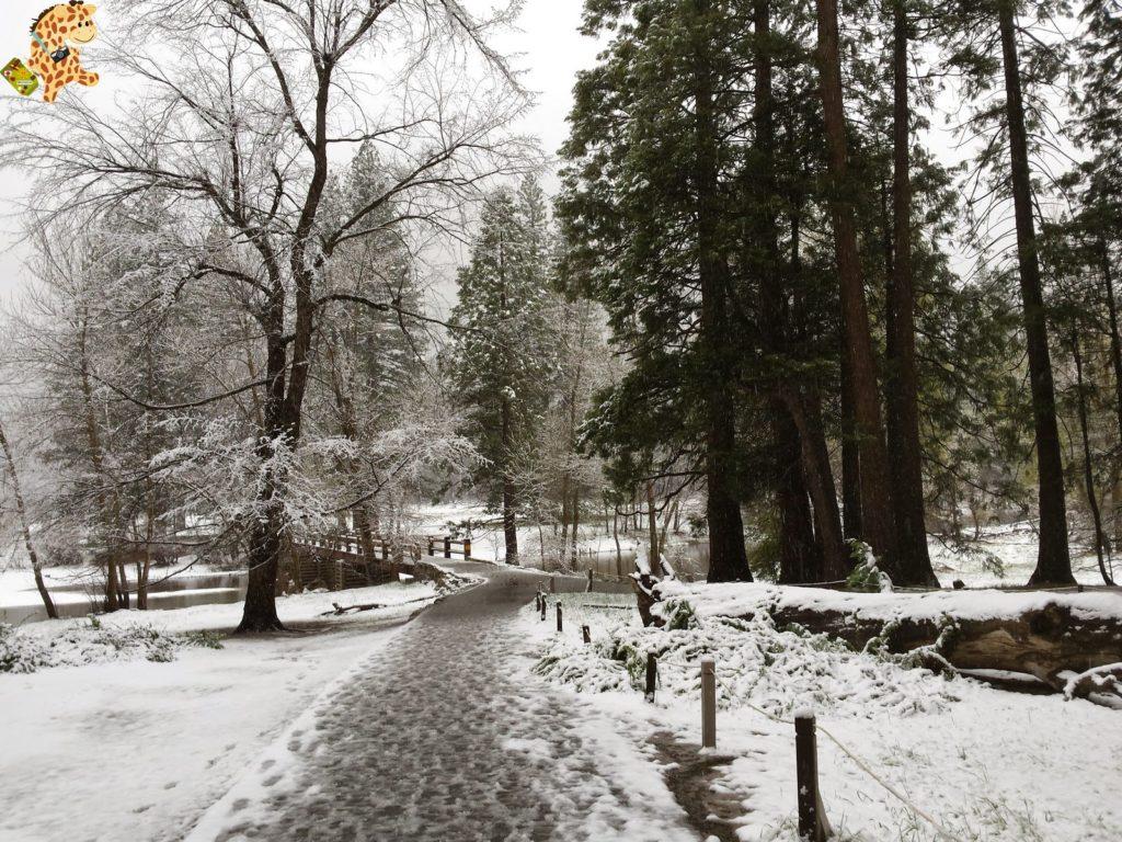 yosemite284529yosemitedeambulandoconartabria 1024x768 - Un día en Yosemite