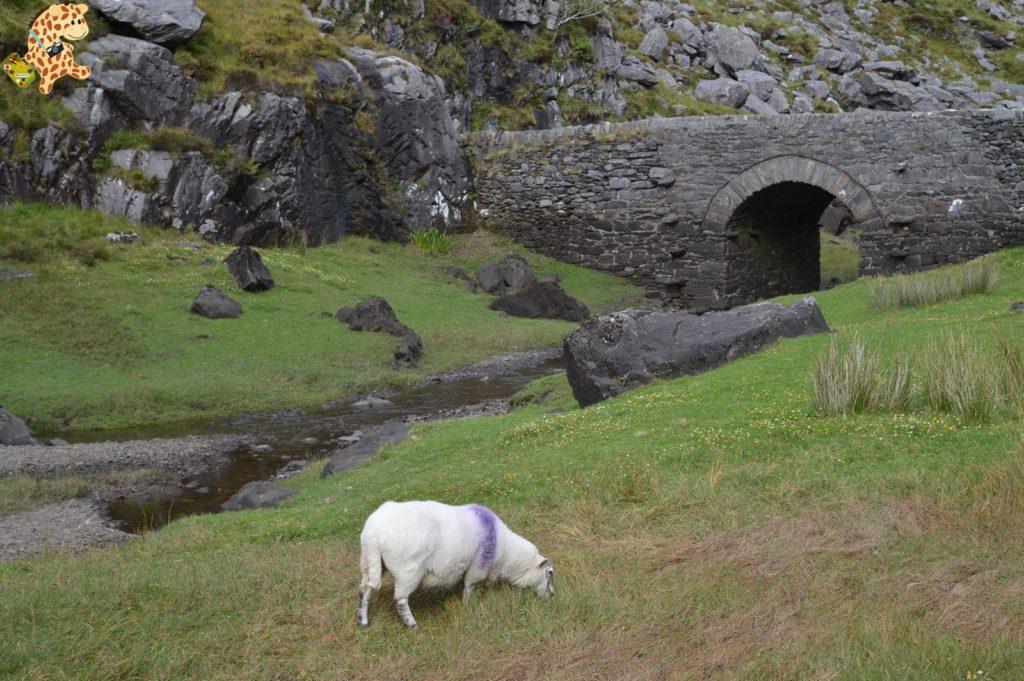 Irlanda281729 1024x681 - Irlanda en 10 días. Itinerario y presupuesto