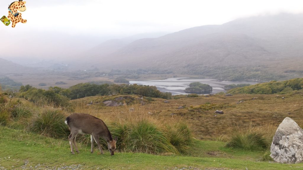 Irlanda2812429 1024x576 - Irlanda en 10 días: Alcantilados de Moher, Adare y Parque Nacional de Killarney