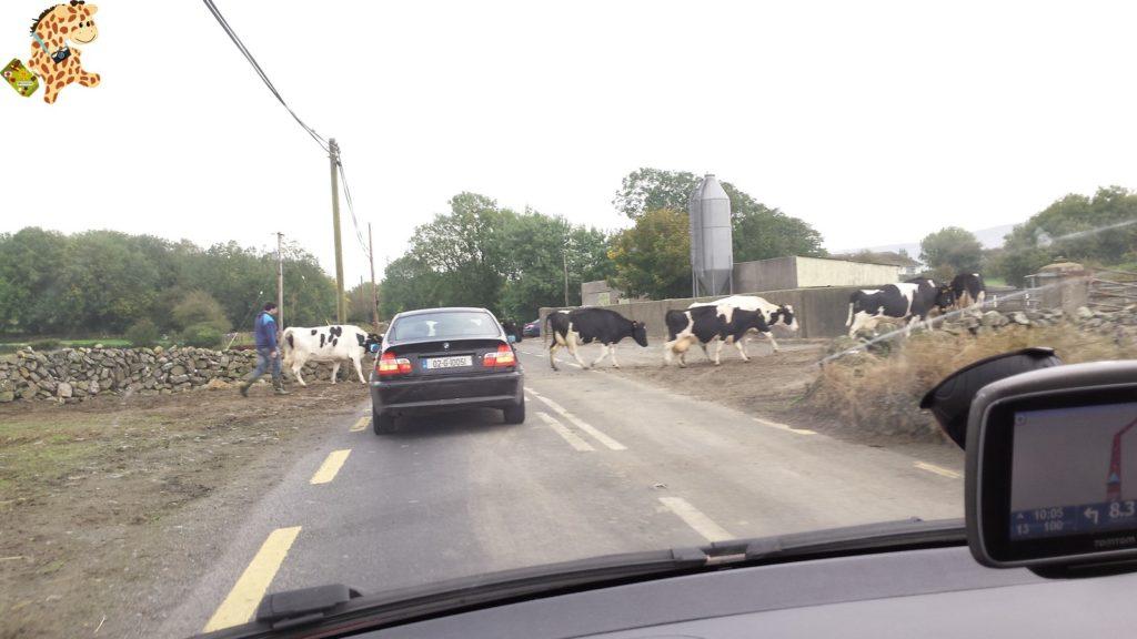 Irlanda28129 1024x576 - Irlanda en 10 días: Alcantilados de Moher, Adare y Parque Nacional de Killarney