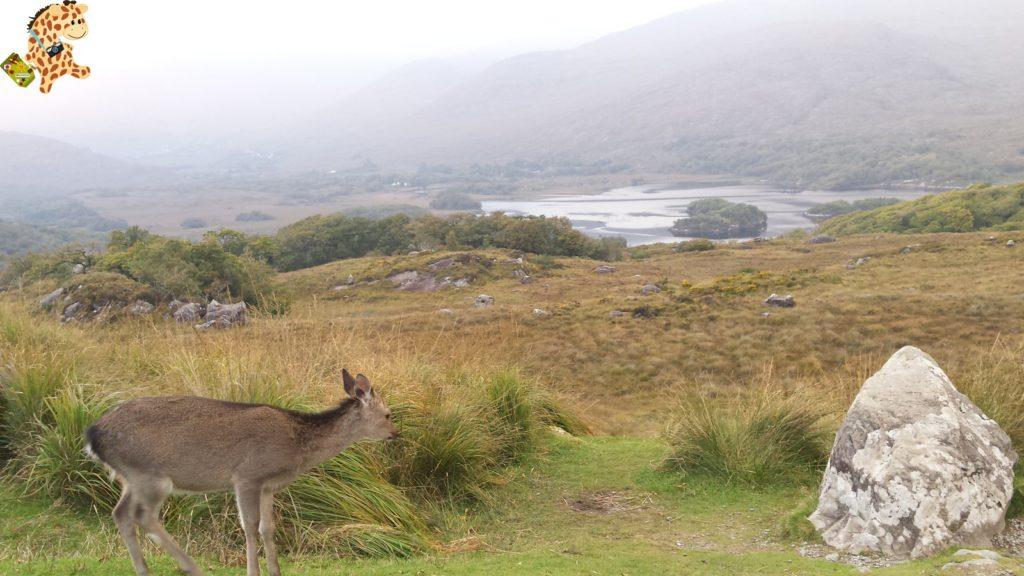 Irlanda2813429 1024x576 - Irlanda en 10 días: Alcantilados de Moher, Adare y Parque Nacional de Killarney