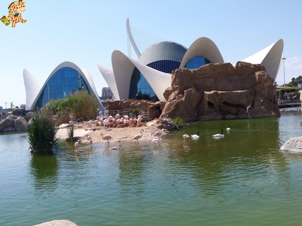 queverenvalencia valenciaconniC3B1os282829 1024x768 - Qué ver en Valencia - Valencia con niños