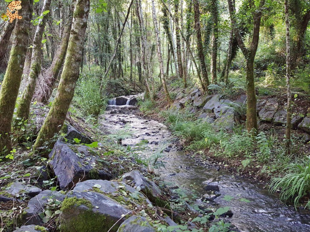 rutadoregocallou senderismoBergondo281229 1024x768 - Ruta do Rego Callou - senderismo en Bergondo (A Coruña)