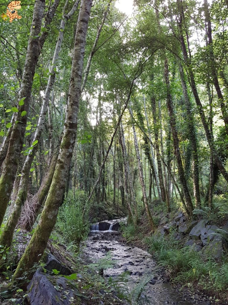 rutadoregocallou senderismoBergondo281329 768x1024 - Ruta do Rego Callou - senderismo en Bergondo (A Coruña)