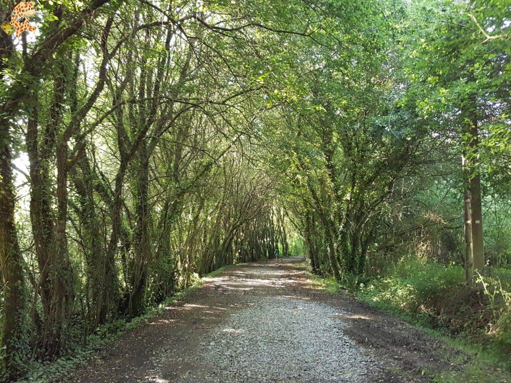 rutadoregocallou senderismoBergondo28229 1024x768 - Ruta do Rego Callou - senderismo en Bergondo (A Coruña)