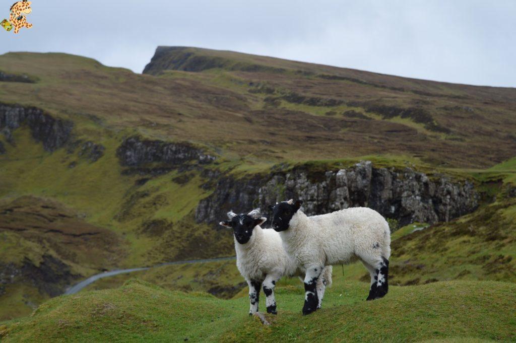 queverenskyeen2dias282829 1024x681 - Isla de Skye en 2 días