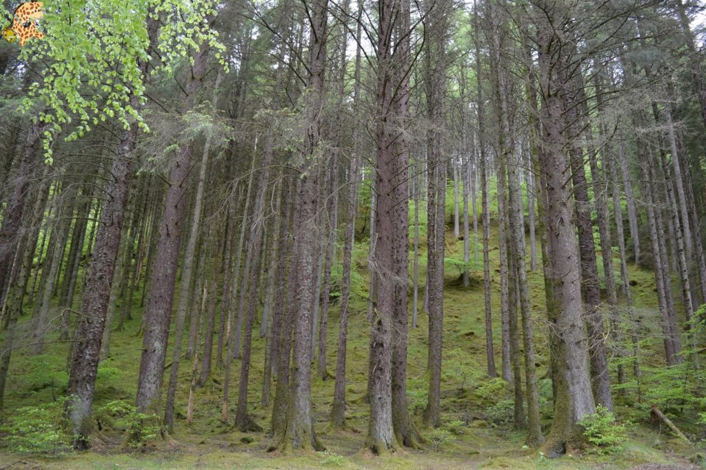 queverenlashighlands284529 1024x681 - Las Highlands: qué ver en las Tierras Altas de Escocia