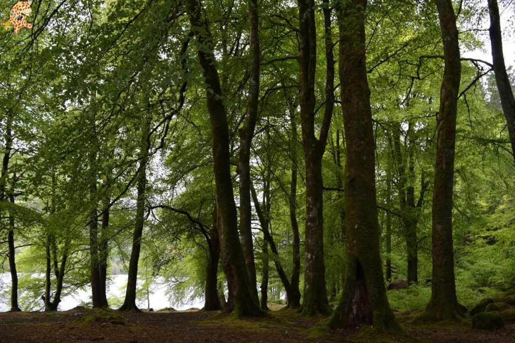 queverenlashighlands284629 1024x681 - Las Highlands: qué ver en las Tierras Altas de Escocia