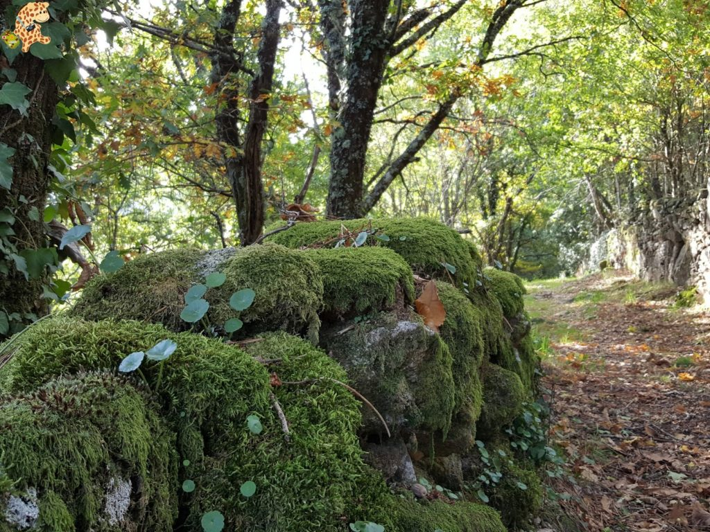surdeOurensebaixalimiaterrascelanova28329 1024x768 - Sur de Ourense: Baixa Limia y Terras de Celanova en un fin de semana