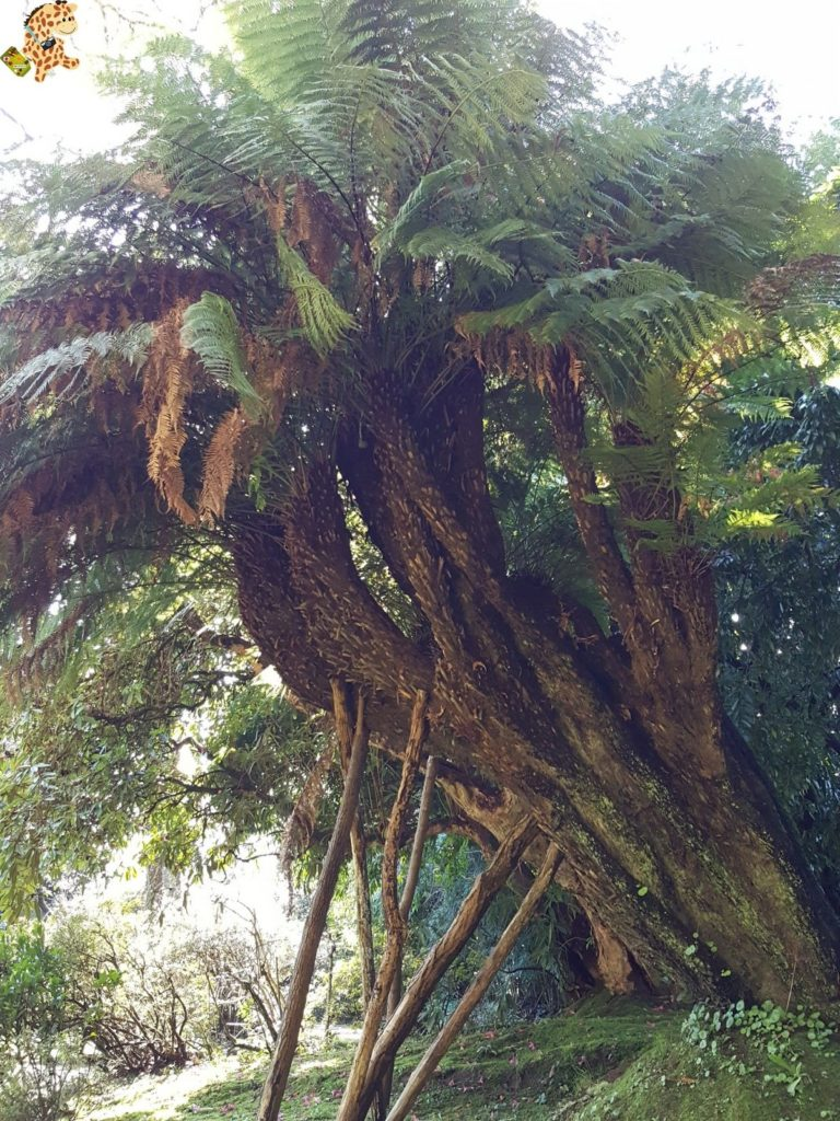 pazodesantacruzderivadulla28129 768x1024 - Pazo de Rivadulla y su magnífico paseo de olivos (Vedra)