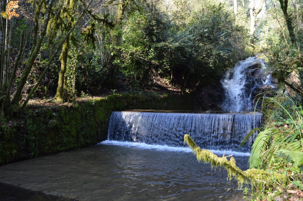 pazodesantacruzderivadulla281529 1024x681 - Pazo de Rivadulla y su magnífico paseo de olivos (Vedra)