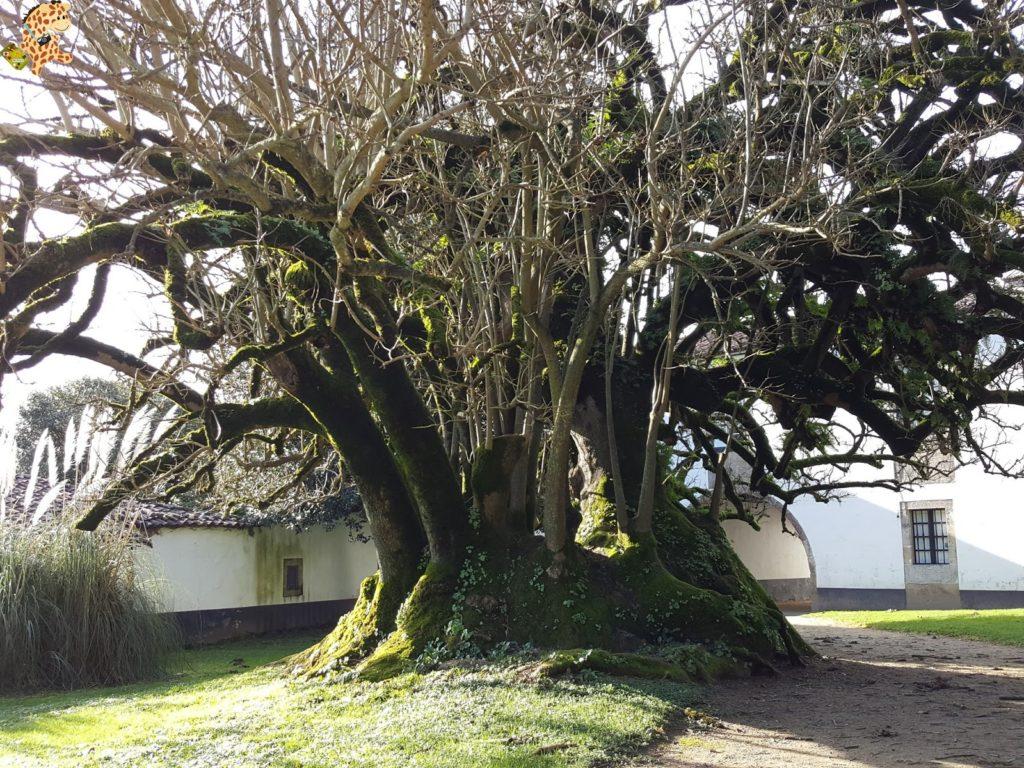 pazodesantacruzderivadulla281629 1024x768 - Pazo de Rivadulla y su magnífico paseo de olivos (Vedra)