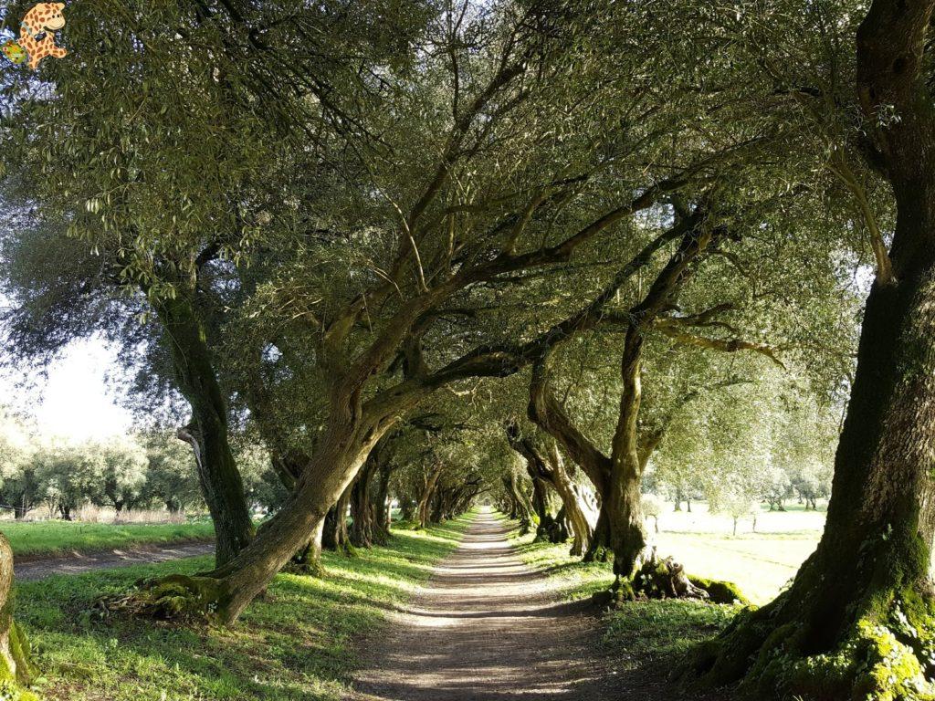 pazodesantacruzderivadulla281829 1024x768 - Pazo de Rivadulla y su magnífico paseo de olivos (Vedra)