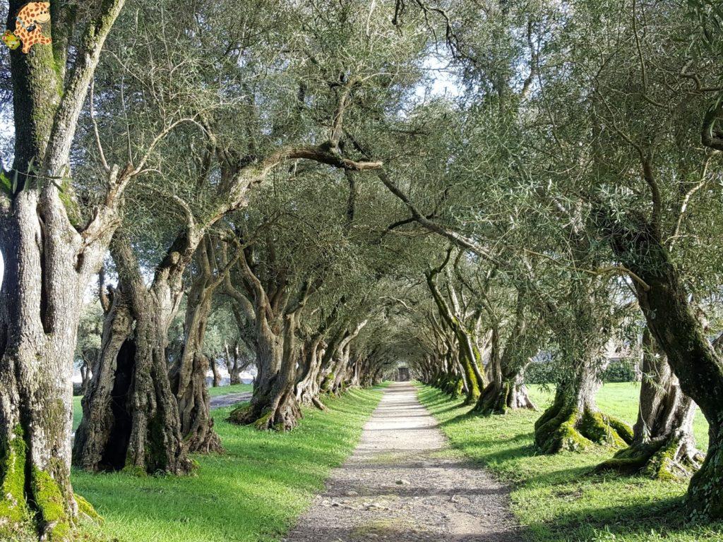pazodesantacruzderivadulla282029 1024x768 - Pazo de Rivadulla y su magnífico paseo de olivos (Vedra)