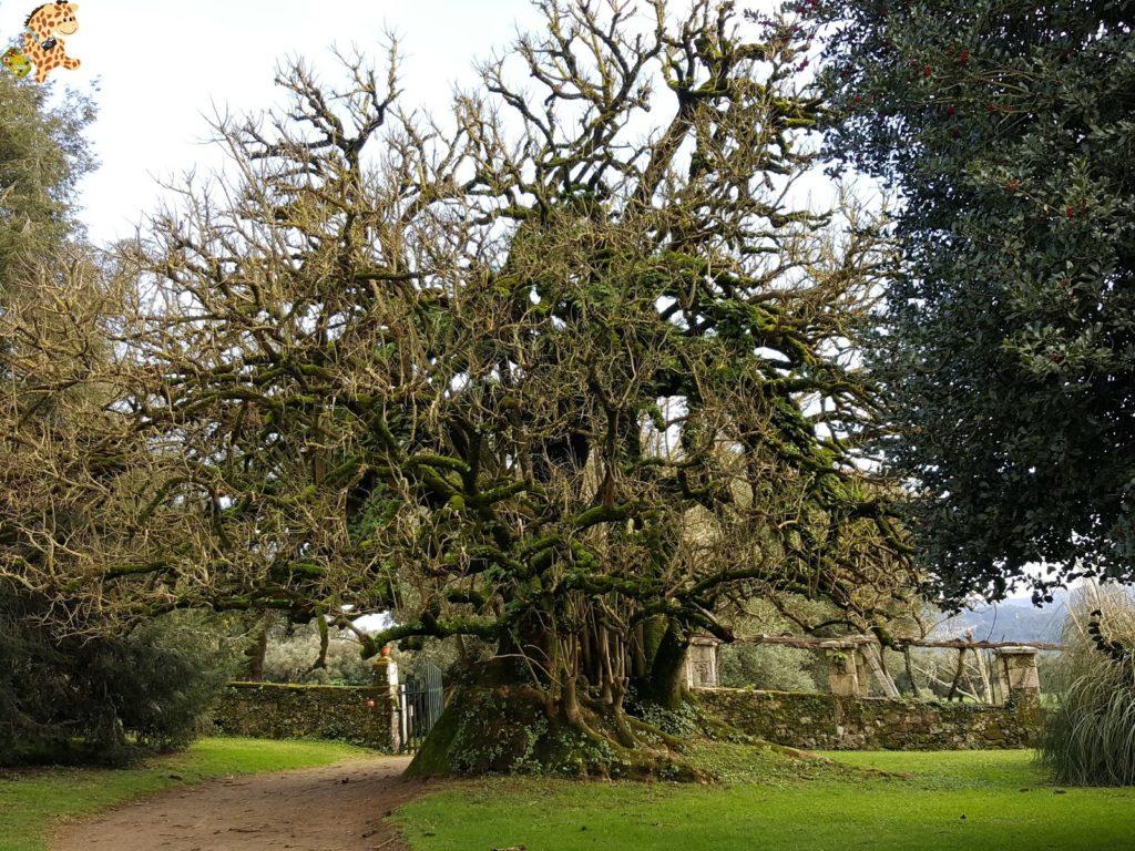 pazodesantacruzderivadulla282229 1024x768 - Pazo de Rivadulla y su magnífico paseo de olivos (Vedra)
