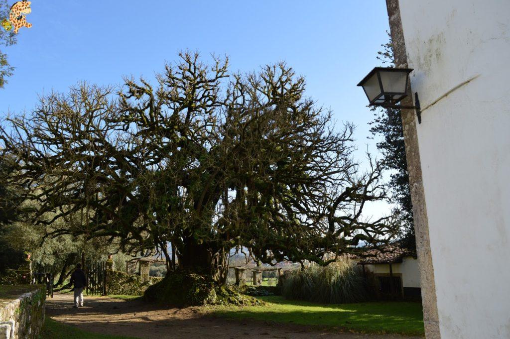 pazodesantacruzderivadulla282929 1024x681 - Pazo de Rivadulla y su magnífico paseo de olivos (Vedra)