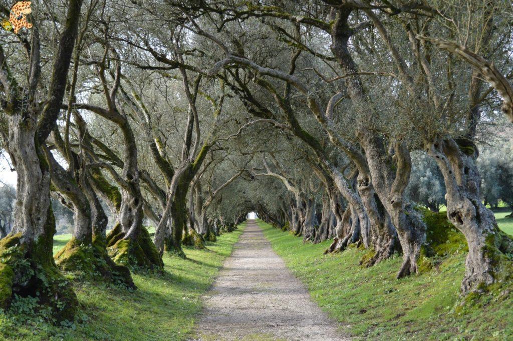 pazodesantacruzderivadulla283029 1024x681 - Pazo de Rivadulla y su magnífico paseo de olivos (Vedra)