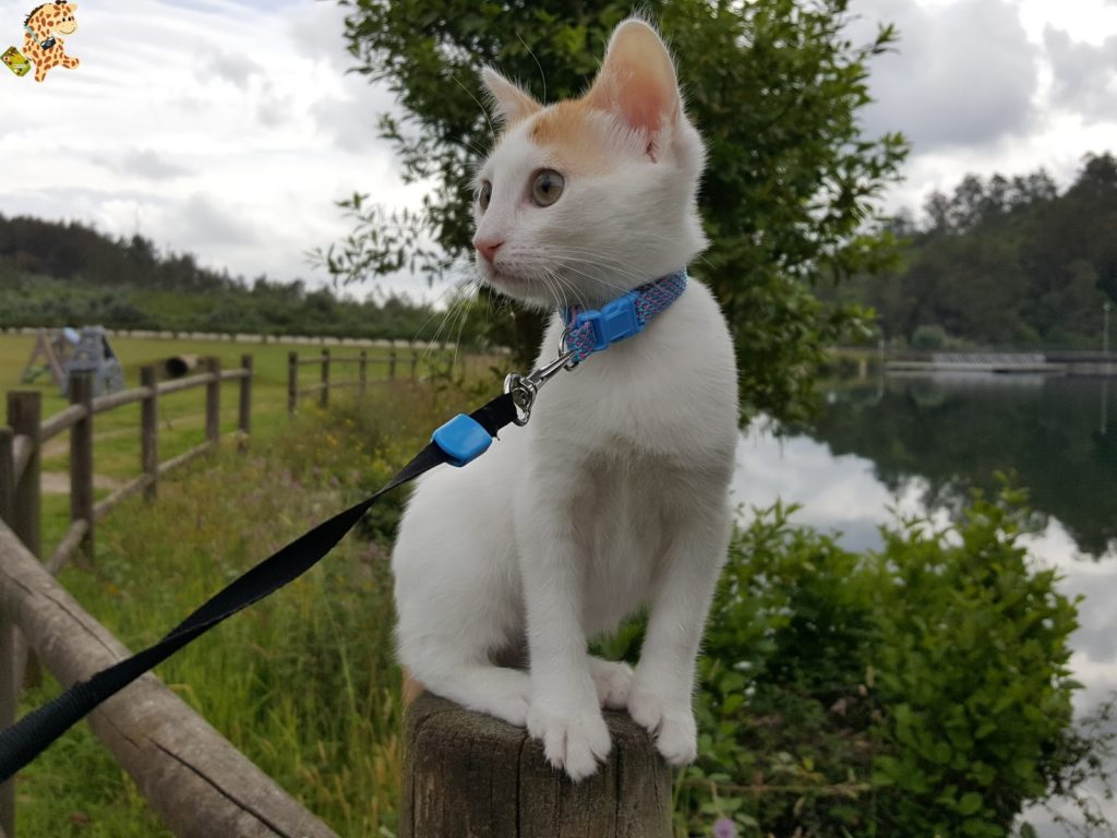 lagataarya28129 1024x768 - Tener un gato por primera vez: 12 cosas que hemos aprendido