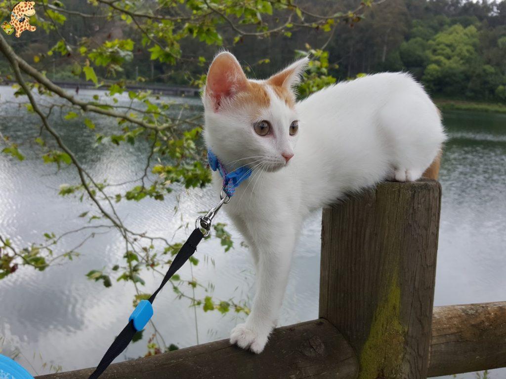 lagataarya28229 1024x768 - Tener un gato por primera vez: 12 cosas que hemos aprendido