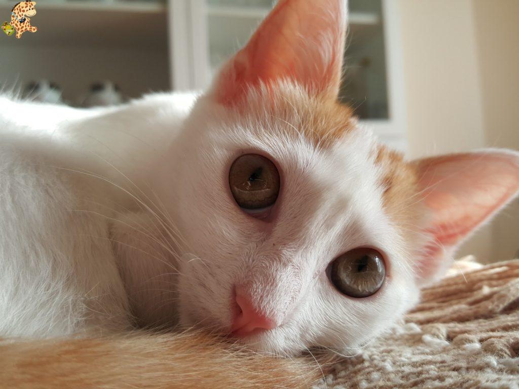 lagataarya28329 1024x768 - Tener un gato por primera vez: 12 cosas que hemos aprendido