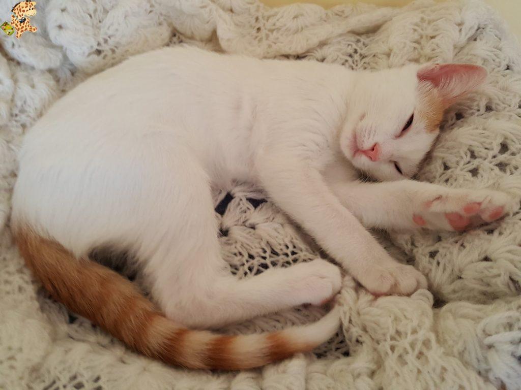 lagataarya28429 1024x768 - Tener un gato por primera vez: 12 cosas que hemos aprendido