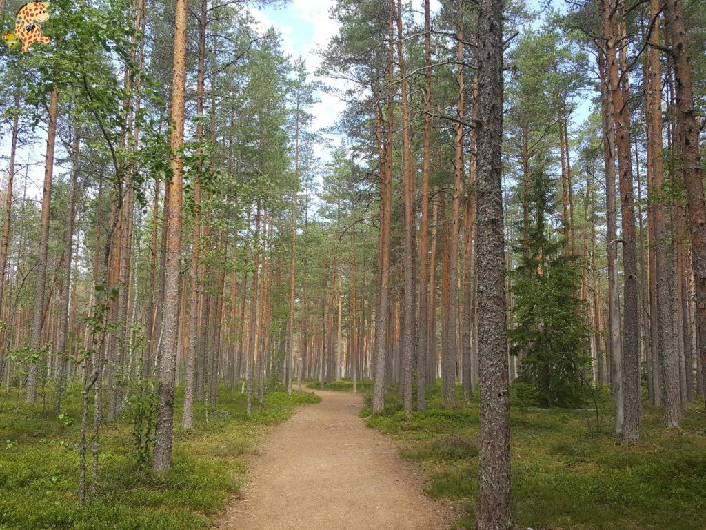 parquenaturallahemaaestonia281229 1024x768 - Parque Nacional de Lahemaa, la excursión perfecta desde Tallin
