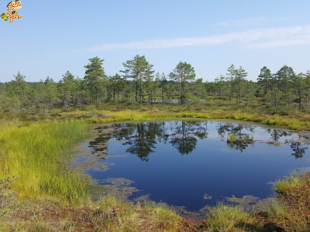 parquenaturallahemaaestonia28129 1024x768 - Parque Nacional de Lahemaa, la excursión perfecta desde Tallin