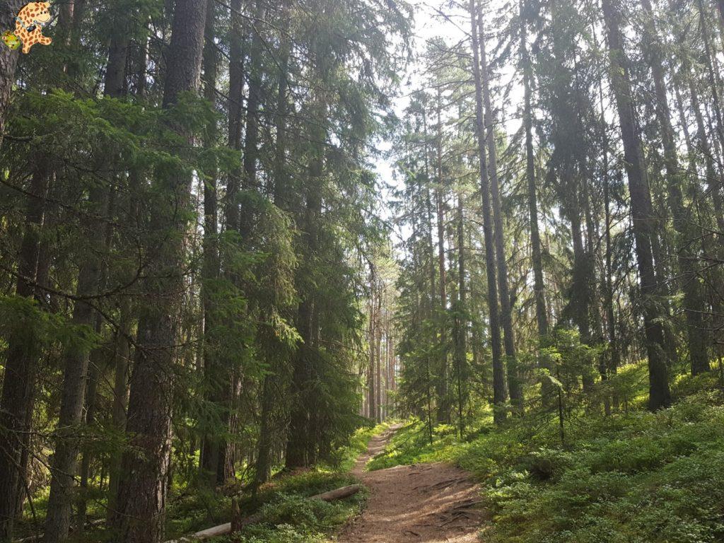 parquenaturallahemaaestonia281429 1024x768 - Parque Nacional de Lahemaa, la excursión perfecta desde Tallin