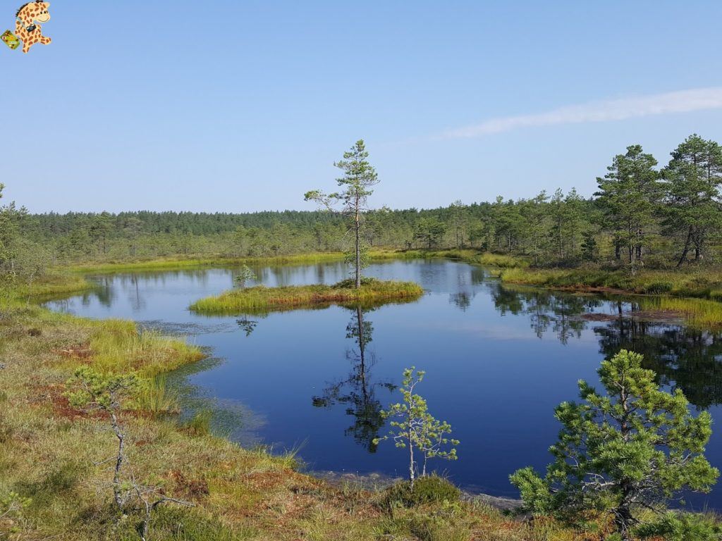 parquenaturallahemaaestonia28229 1024x768 - Parque Nacional de Lahemaa, la excursión perfecta desde Tallin