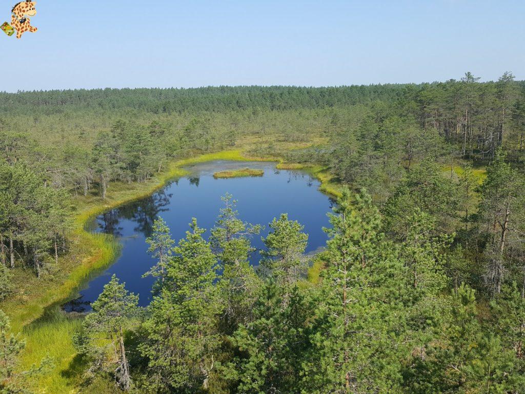parquenaturallahemaaestonia28429 1024x768 - Parque Nacional de Lahemaa, la excursión perfecta desde Tallin