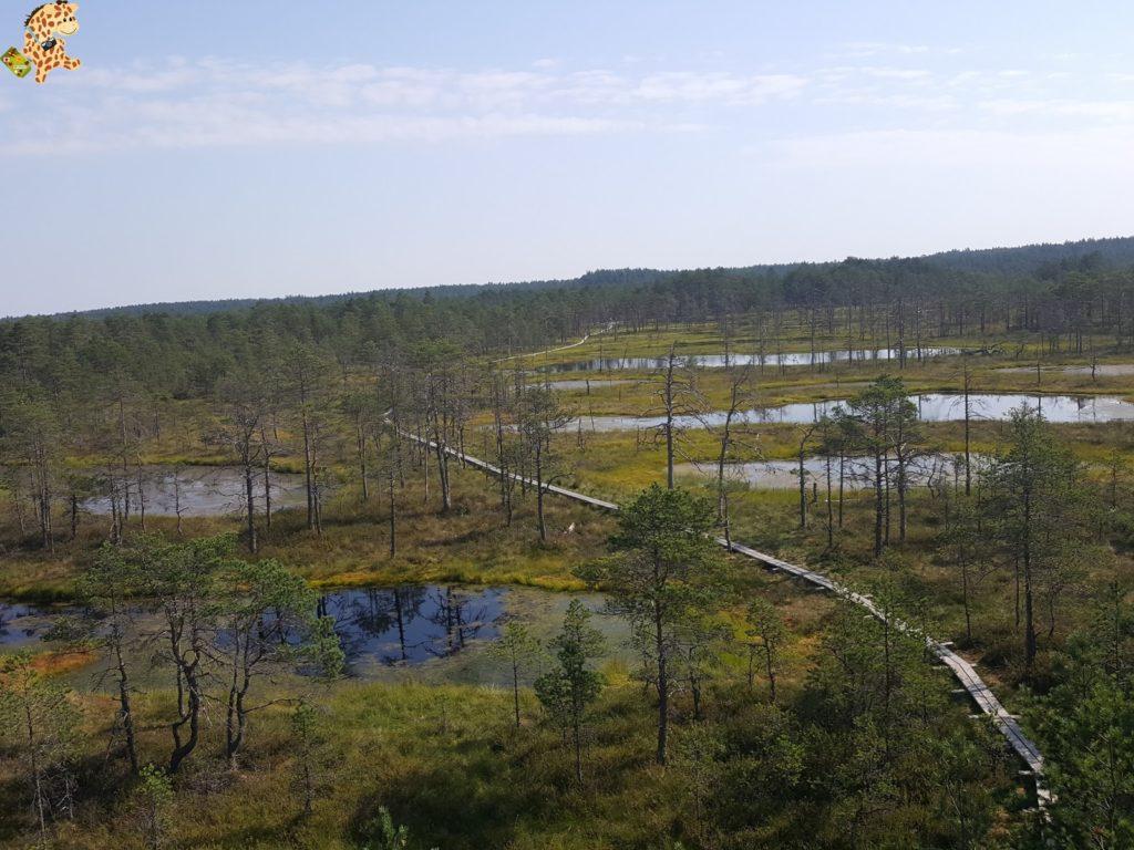 parquenaturallahemaaestonia28629 1024x768 - Parque Nacional de Lahemaa, la excursión perfecta desde Tallin