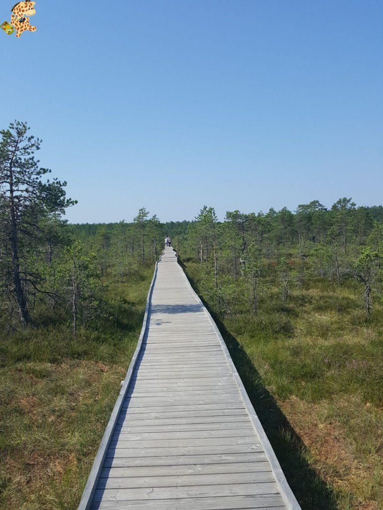 parquenaturallahemaaestonia28829 768x1024 - Parque Nacional de Lahemaa, la excursión perfecta desde Tallin