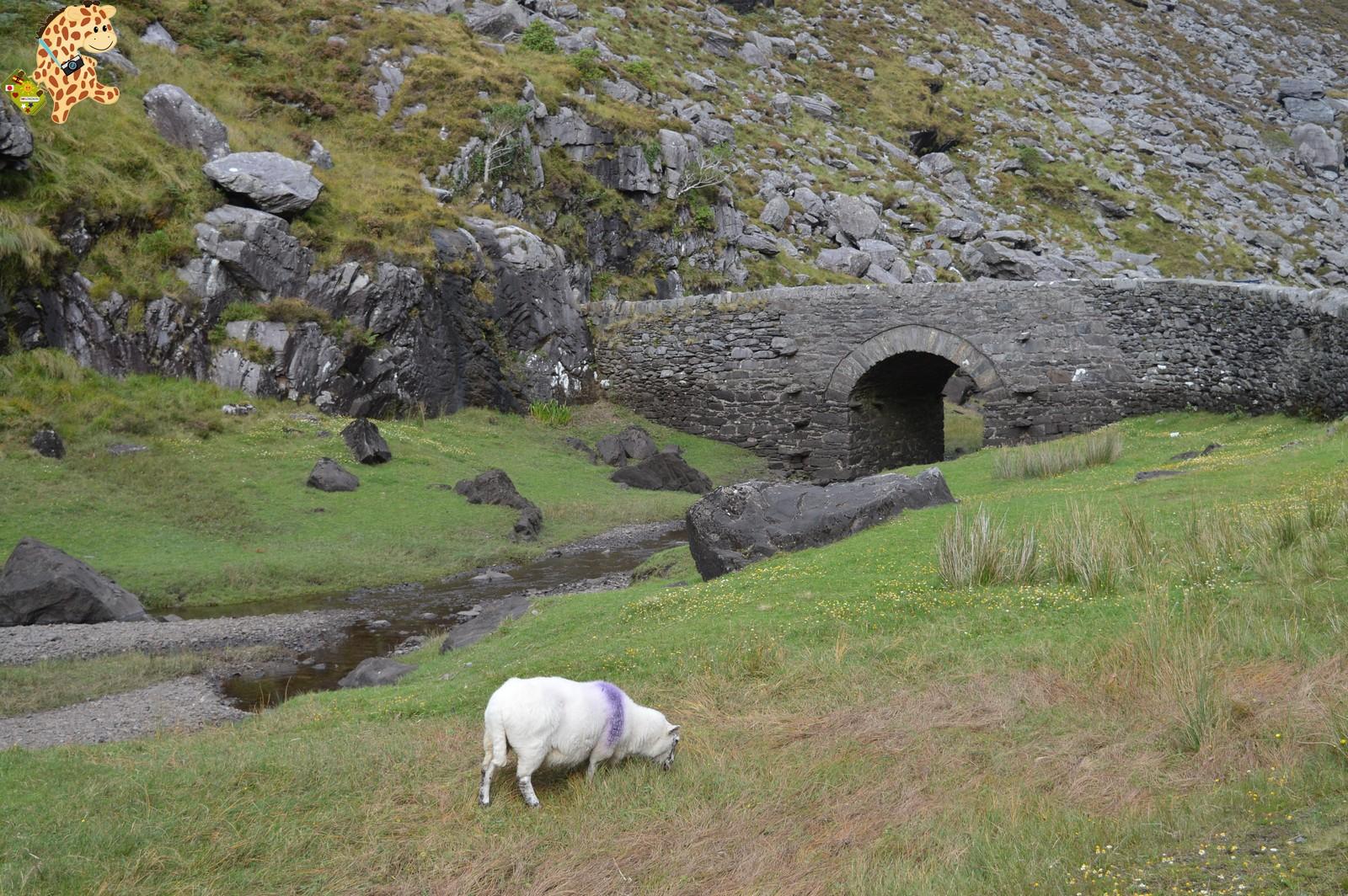 Irlanda en 10 días (IV): Gap of Dunloe, castillo de Blarney y Cork