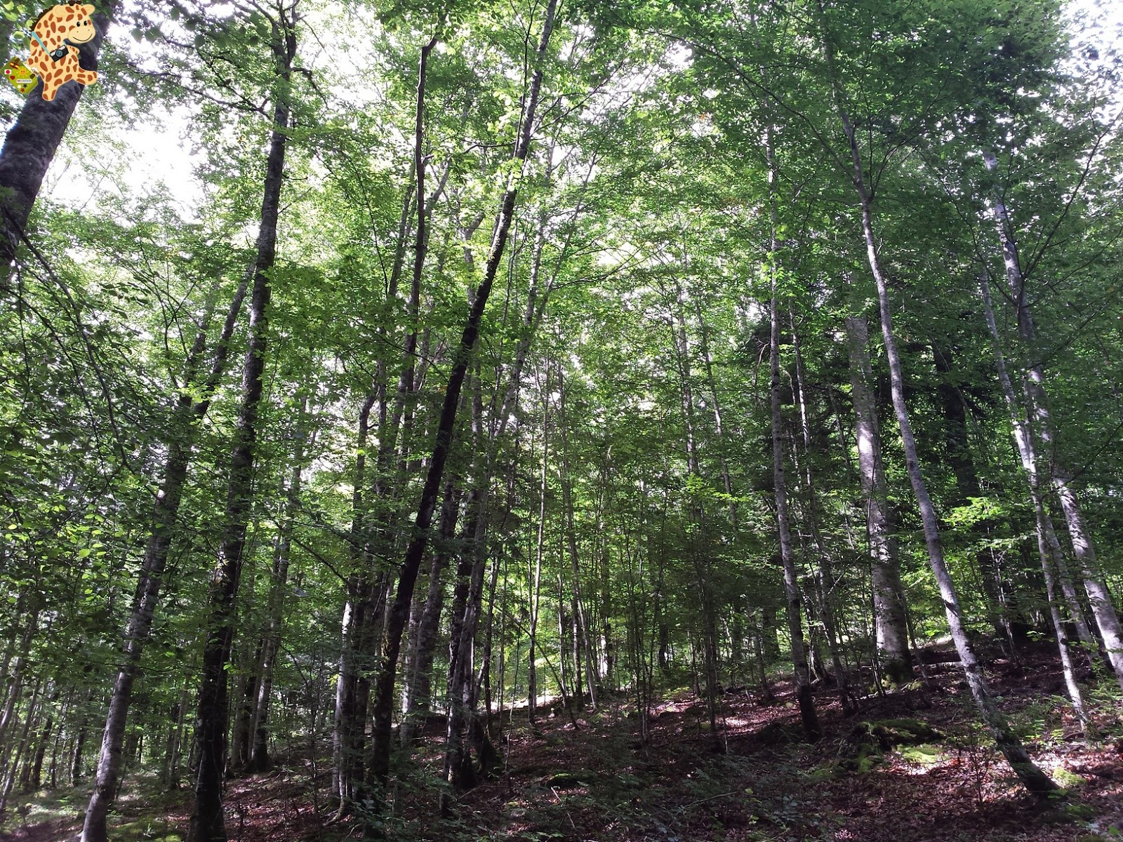 Qué ver en Ochagavía y la Selva de Irati