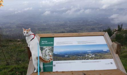 terras do condado paradanta 4 445x265 - Un fin de semana en Terras do Condado - A Paradanta (Rías Baixas)