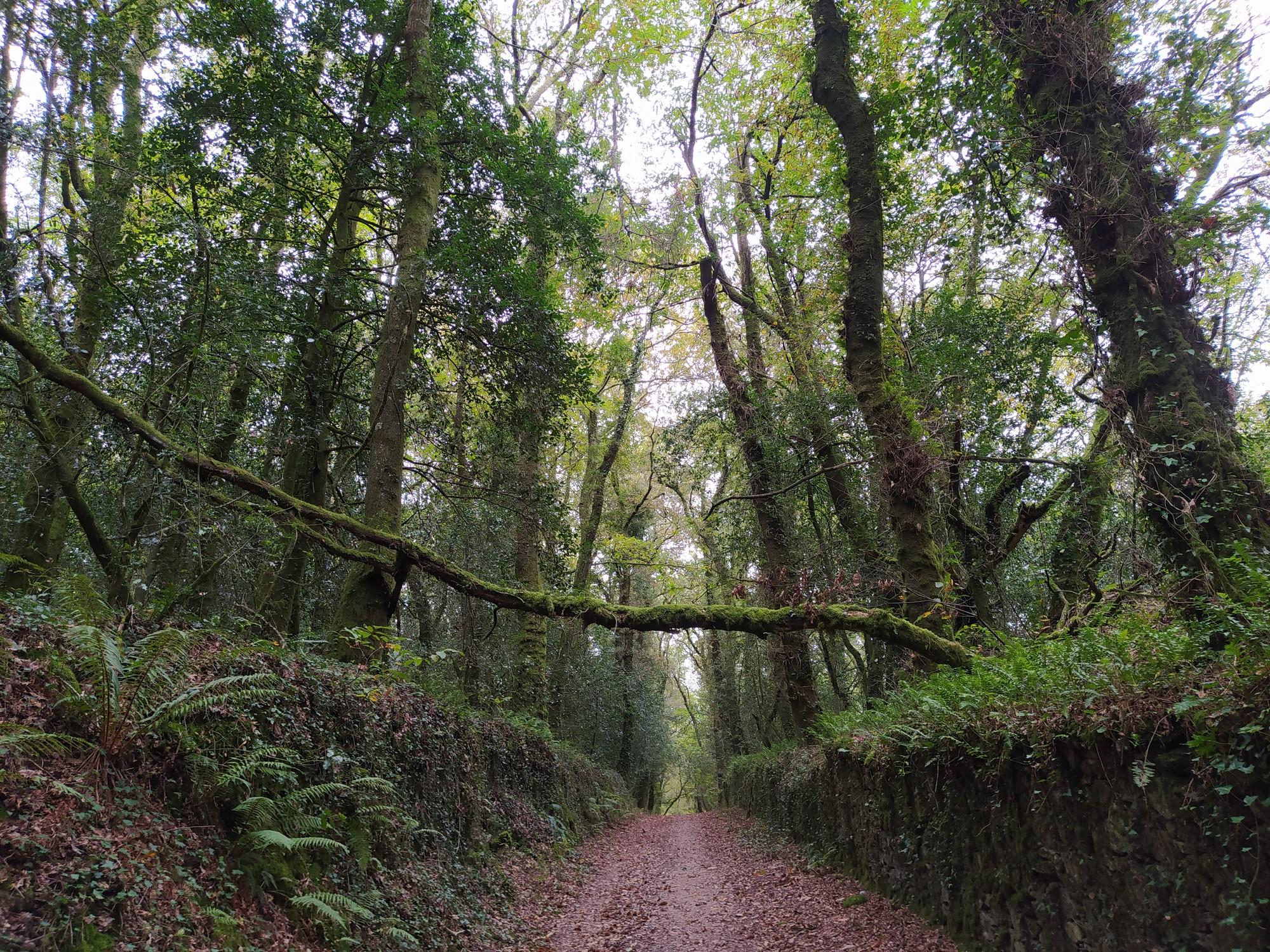 ruta da carballeira sobrado dos monxes 14 - Senderismo en Sobrado dos Monxes: ruta da carballeira