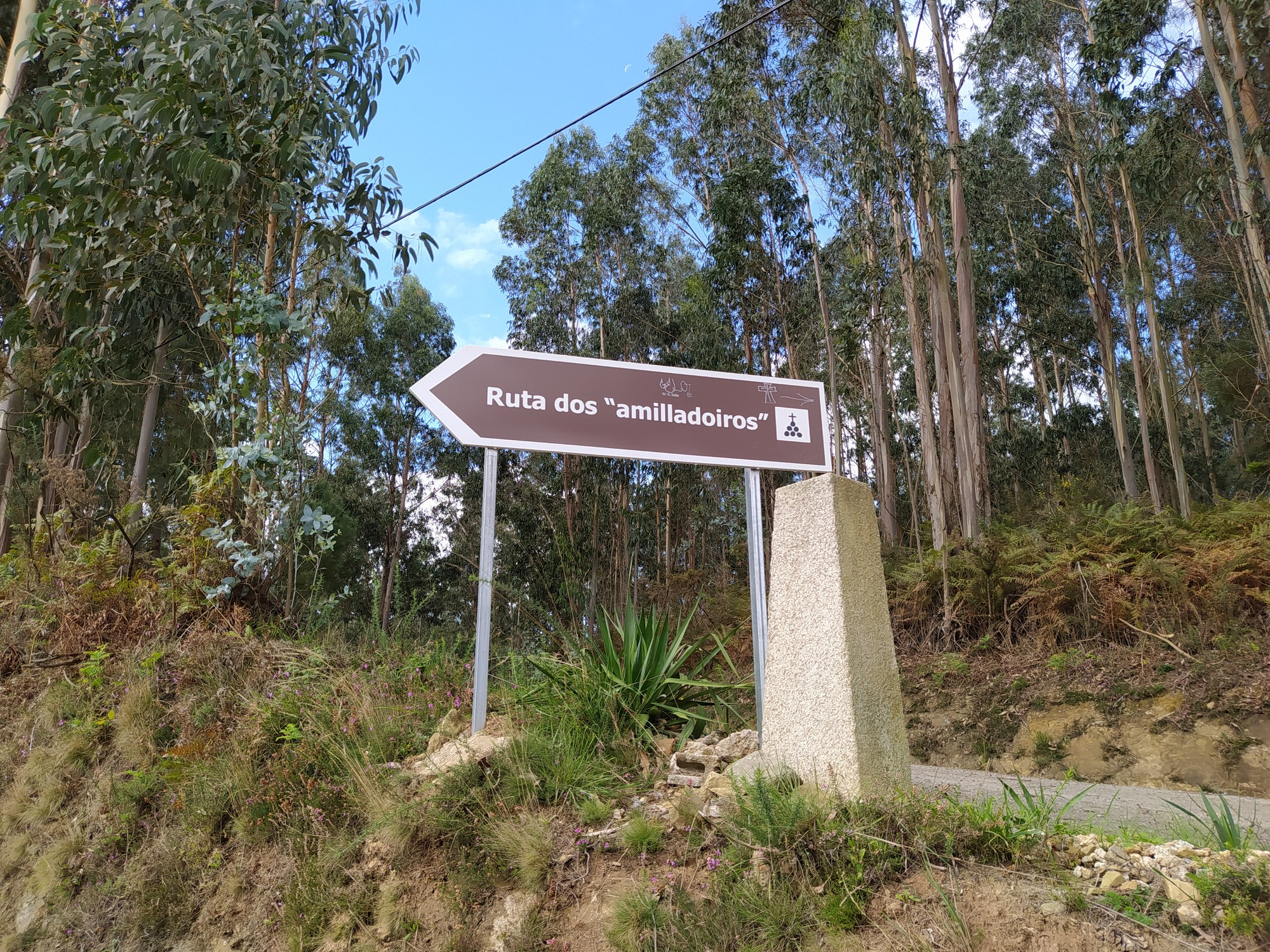 senda dos amilladoiros abegondo 15 - Senderismo en Abegondo: ruta dos amilladoiros