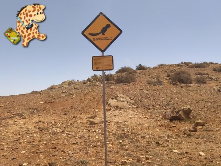 fuerteventura 16 - Fuerteventura desde Lanzarote